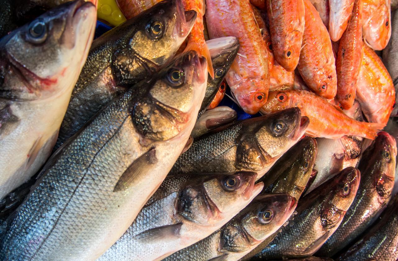 fresh-fish-in-a-market